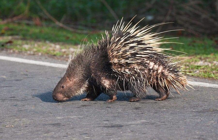 michigan-dui-charge-from-porcupine
